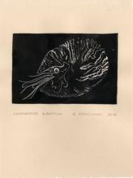Chambered Nautilus by Geralynn Rackowski